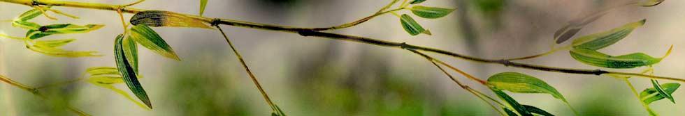 header-bambus.jpg